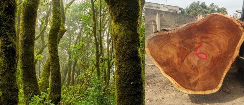 Bosques tropicales, ¿cómo protegerlos?