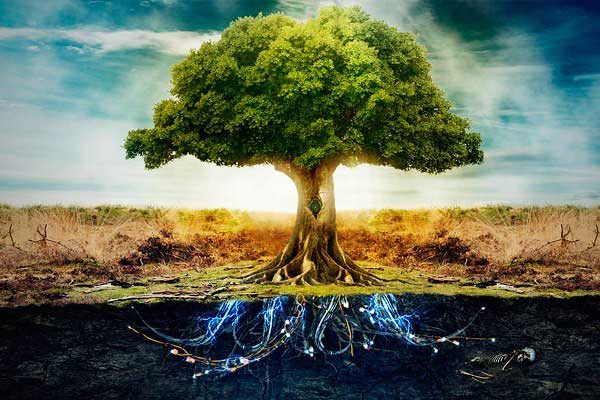Los árboles tienen sentimientos, son sociables y se cuidan entre ellos