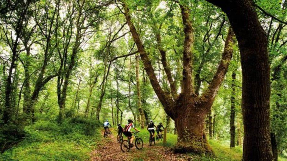 Los árboles de distintas especies se ayudan para incrementar la producción de madera del bosque