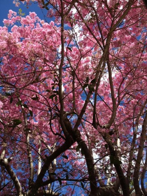 La Corporación de Manejo Forestal Sustentable realizará la entrega de 1300 plantas al Distrito Metropolitano de Quito