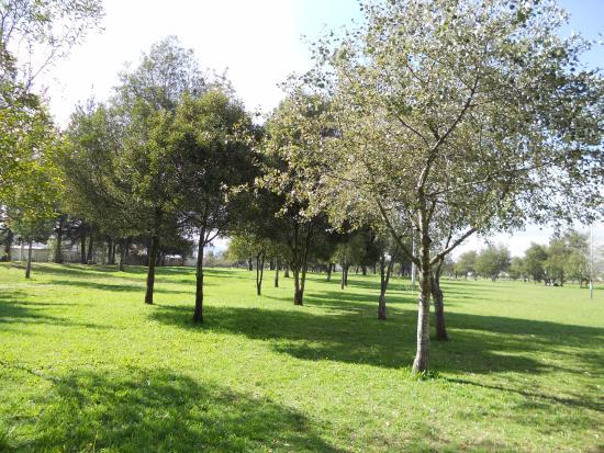 En la ciudad de Quito se sembró 10 000 árboles en el antiguo aeropuerto