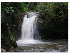 Creación de la Estructura de la Cuenta Satélite de Bienes y  Servicios que Generan los bosques y el  fortalecimiento de políticas públicas   dirigidas a  desarrollar la industria