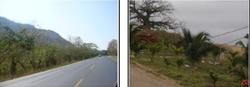 Plan de Reforestación Sustentable orientado a proporcionar Servicios Ambientales en las vías concesionadas y otros  sectores de la Provincia del Guayas