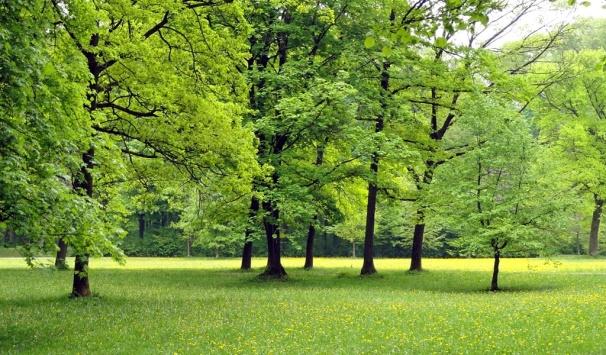 Así es como los bosques frenan el cambio climático