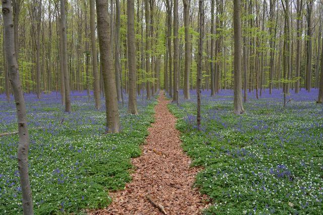 ¿Qué aportan los bosques al mundo rural?