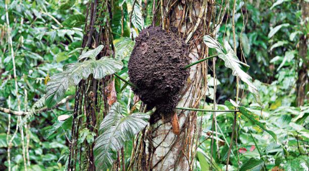 Santo Domingo: Dos bosques son preservados