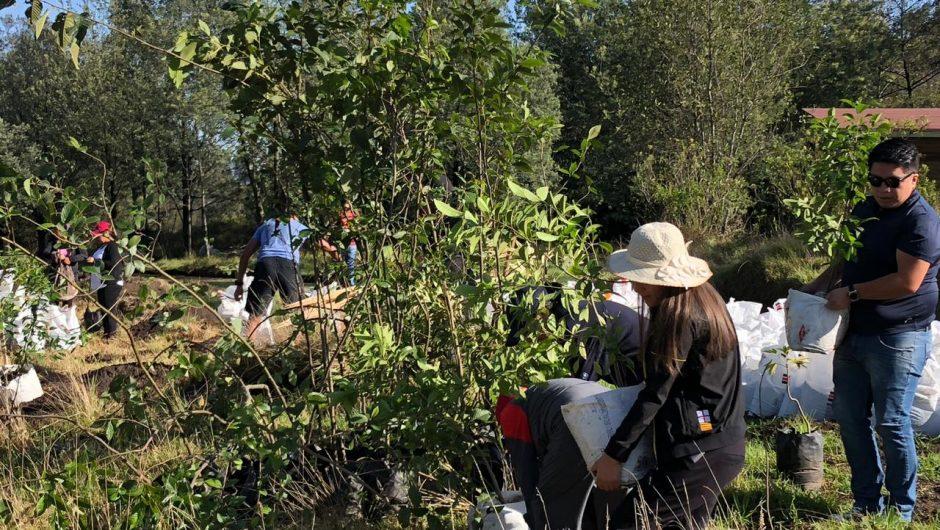 COMAFORS colaboró con la donación de árboles a BIODIMED