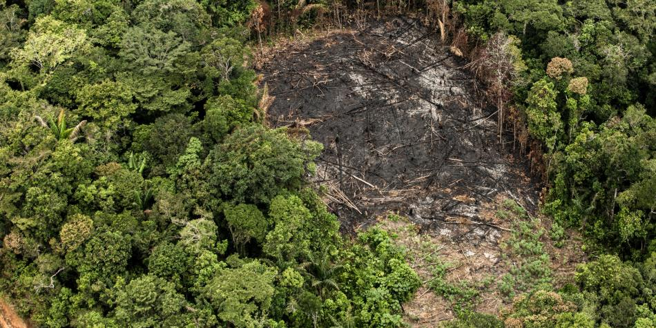 El proyecto científico que busca combatir la tala ilegal en el mundo