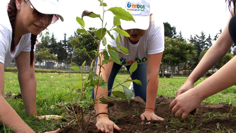 La Corporación Maresa con la colaboración de Corporación de Manejo Forestal Sustentable, sembraron 250 árboles en el DMQ