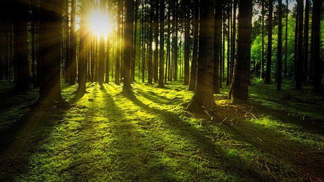 Plantar un billón de árboles, la mejor manera de combatir el cambio climático