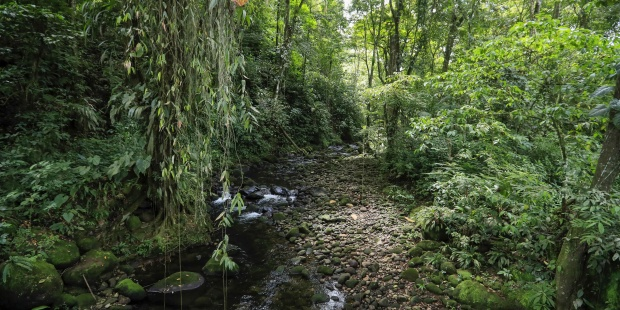 Preservar los bosques tropicales es fundamental para mitigar la crisis climática