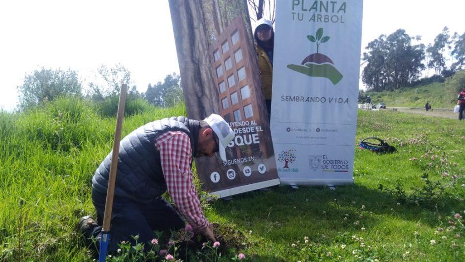 300 árboles nativos fueron plantados para la restauración ecológica de la Carita de Dios