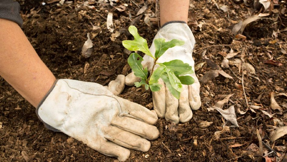 Plantar un árbol: una acción concreta para combatir el cambio climático