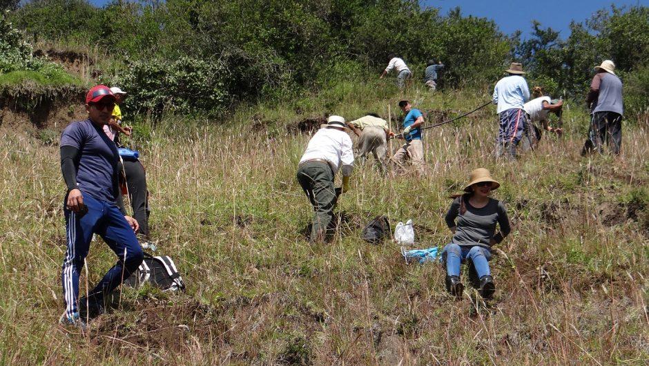 """1000 árboles se plantaron en el Ilaló como parte de la iniciativa """"Yo quiero plantar un millón de árboles"""""""