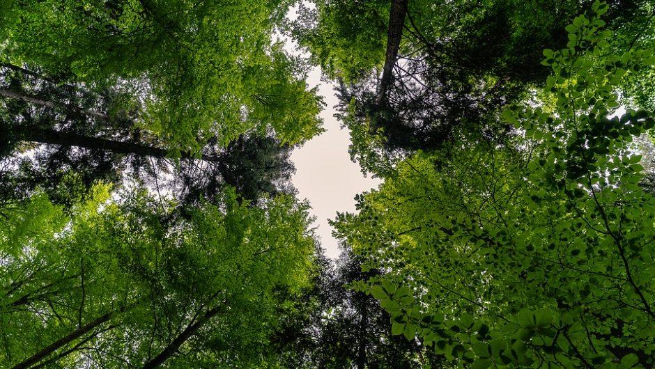 Los bosques, de sumidero a fuente de CO2 en unas décadas